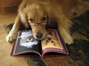letture sull'educazione cinofila