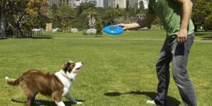 quali-giochi-fare-con-il-cane